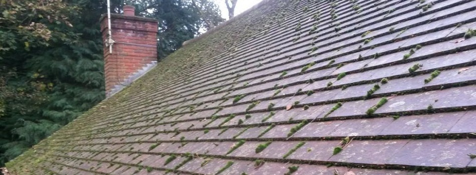 The Ultimate Guide To Removing And Preventing Roof Moss