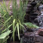 Cost to Install a Garden Pond
