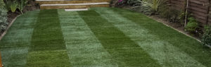 Turf to lawn