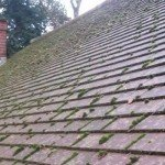Roof Cleaning and Moss Removal – Everything You Need to Know