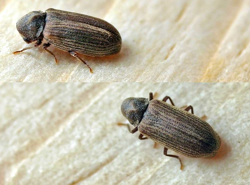 A Look at Woodworm Treatment Costs in the United Kingdom