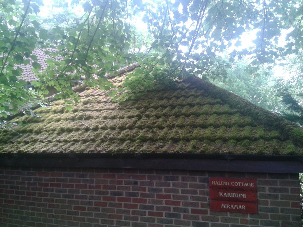 Free Roof Cleaning And Moss Removal Photos You Can Use