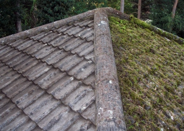 Moss on concrete roof tiles