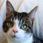 What is the Lifetime Cost of Owning a Cat in the UK?