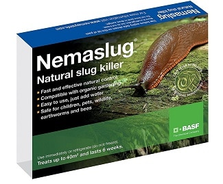 Nematodes to kill slugs in the garden