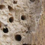 Woodworm Treatment Cost Guide