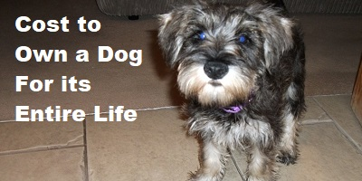 Dog Immunisations Cost Uk